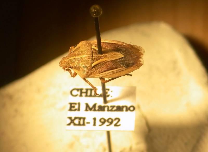 Un nouvel insecte nommé d'après Harry Potter !