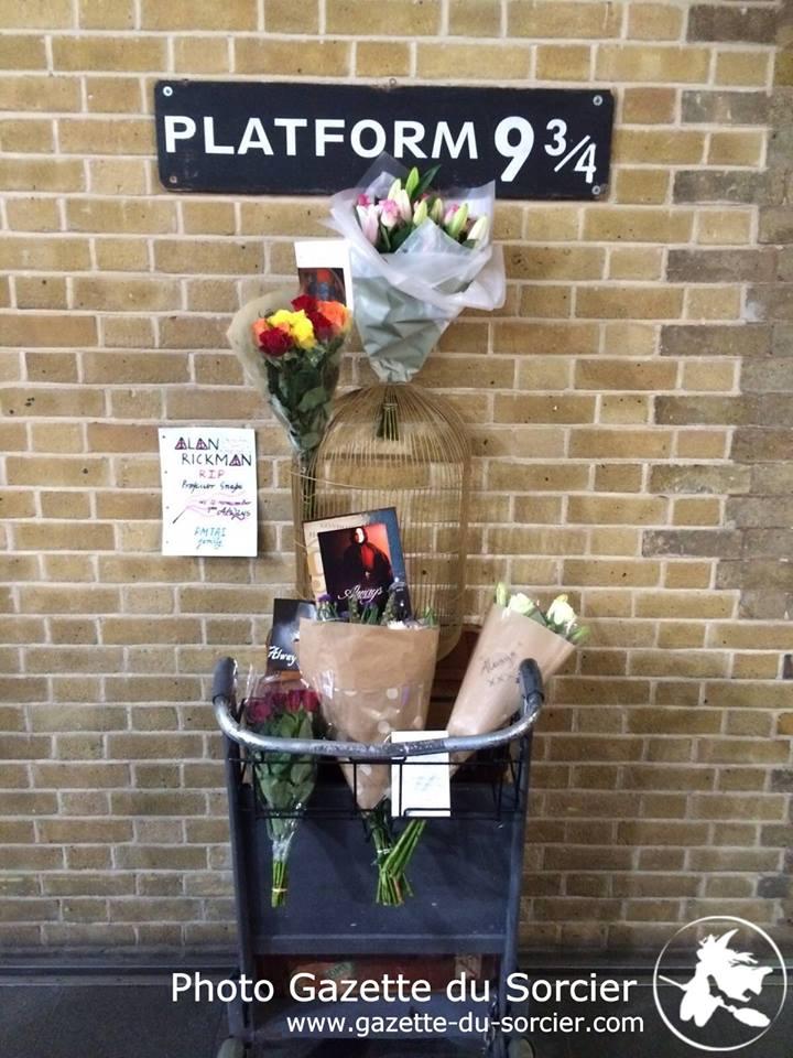 Fleurs et photos laissés en hommage à Alan Rickman sur le chariot du Quai 9 3/4 le jour de son décès