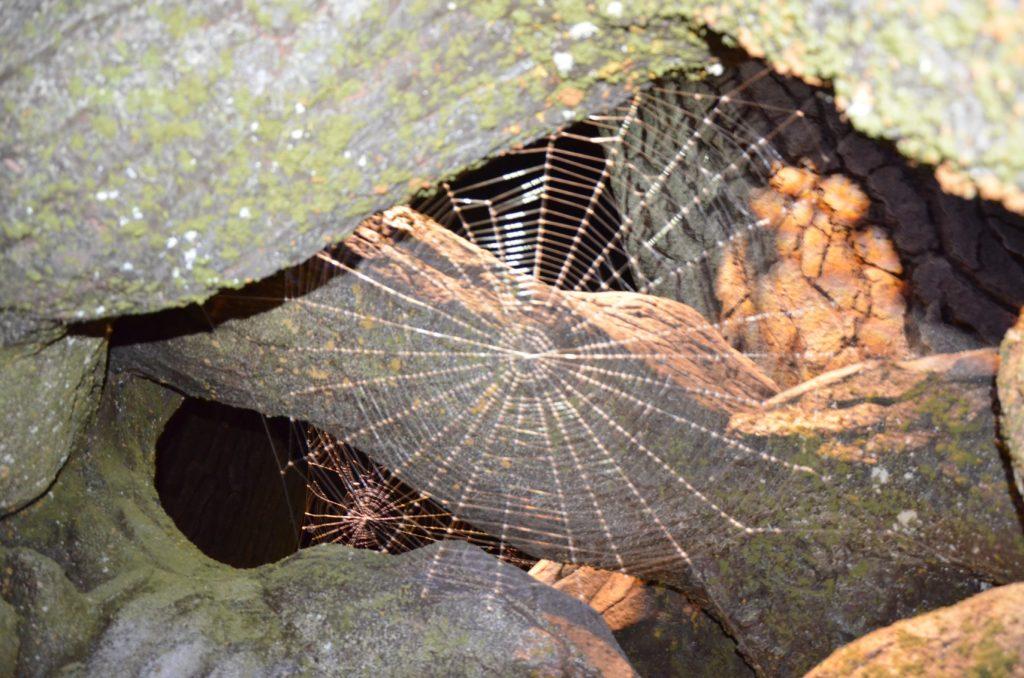 Toile d'araignée dans la Forêt Interdite