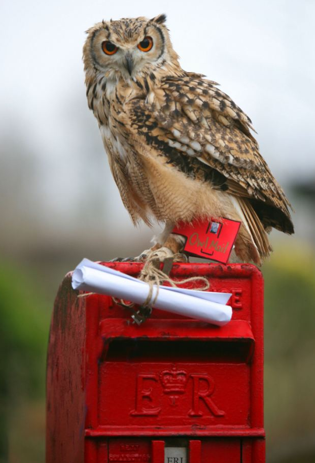 owls2bdelive3008.png