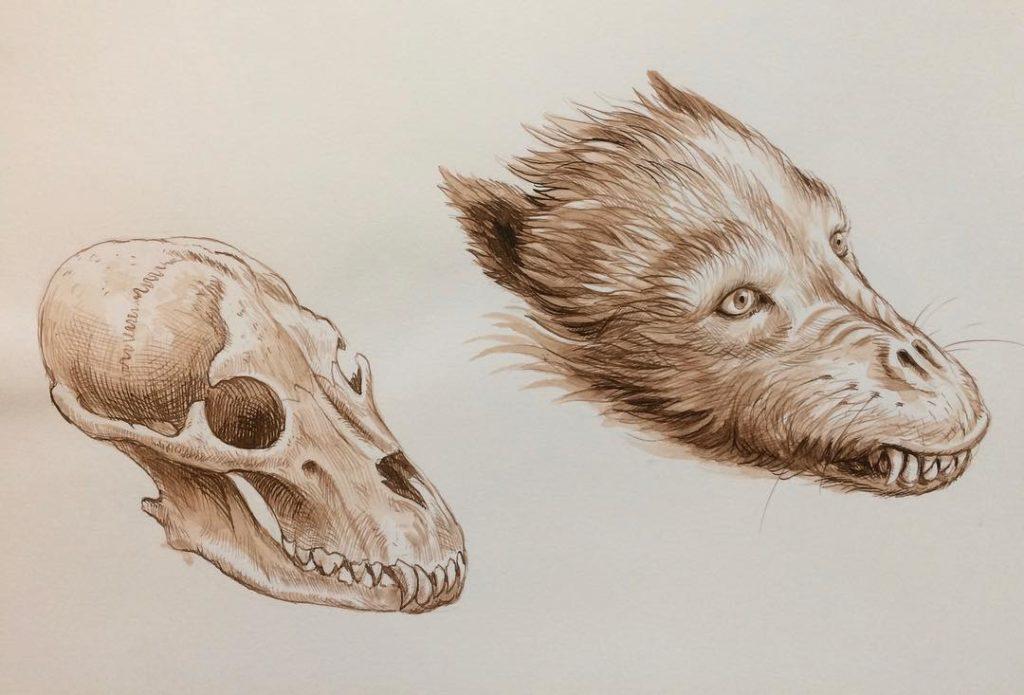 Etude anatomique d'un loup-garou par Jim Kay pour Harry Potter et le prisonier d'Azkaban