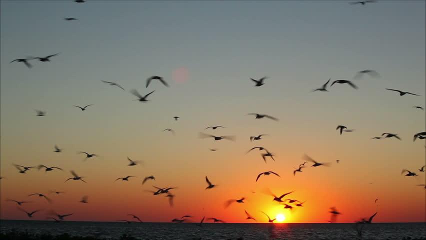 Oiseaux qui volent au-dessus de la mer au coucher de soleil.