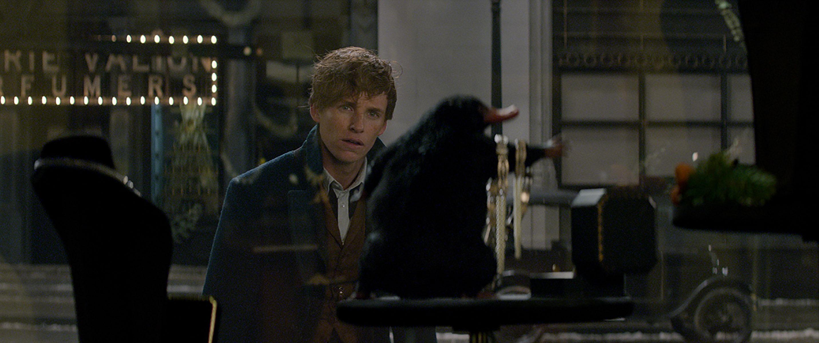 Newt & Niffleur dans la bijouterie Animaux fantastiques