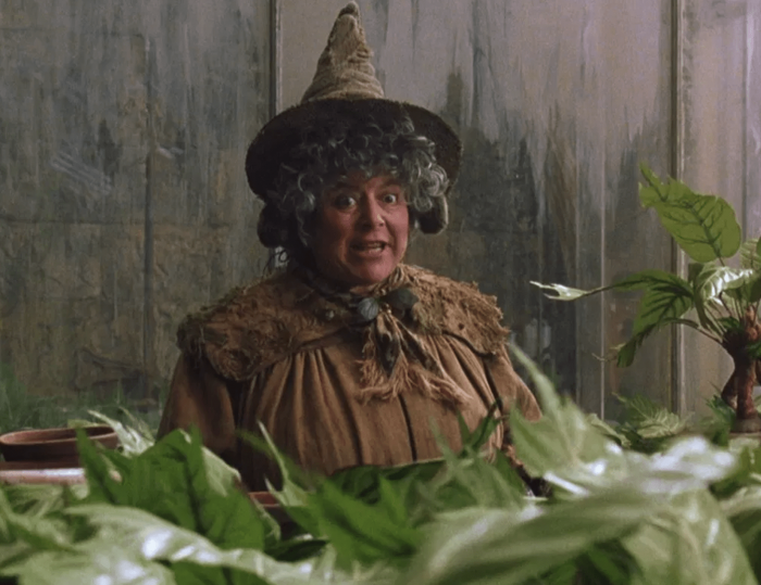 Six plantes citées dans Harry Potter qui existent et auxquelles vous devriez vous intéresser