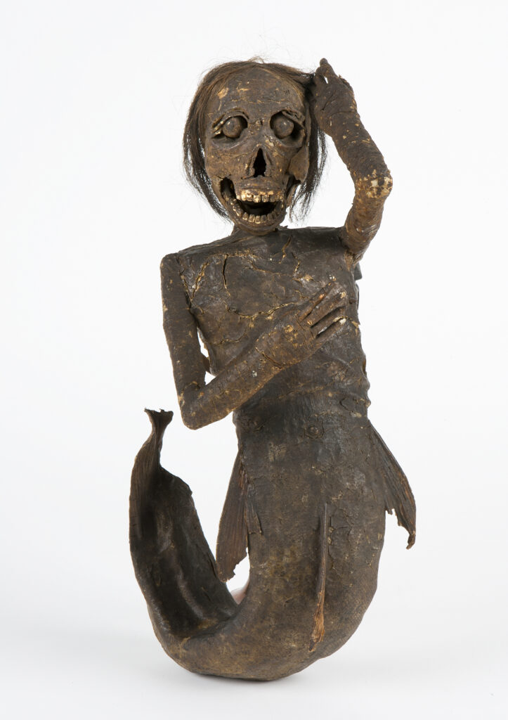 Sirène momifiée - Buxton Mermaid - à l'exposition Fantastic Beasts : The Wonder of Nature, Natural History Museum
