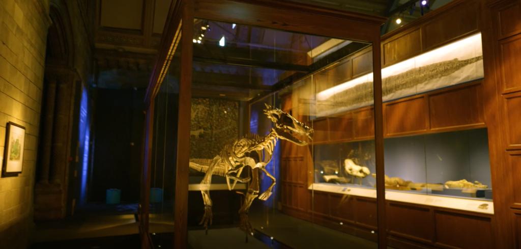 Le squelette du Dracorex Hogwartsia, exposé pour Fantastic Beasts : The Wonder of Nature, Natural History Museum