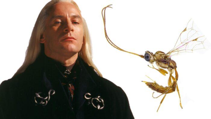 Une nouvelle guêpe nommée Lucius Malefoy !