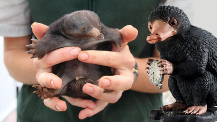 Les animaux fantastiques dans la vie des moldus