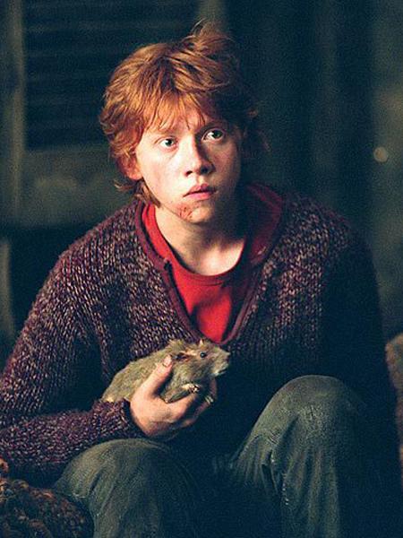 Peter sous la forme de Croûtard, dans les mains de Ron