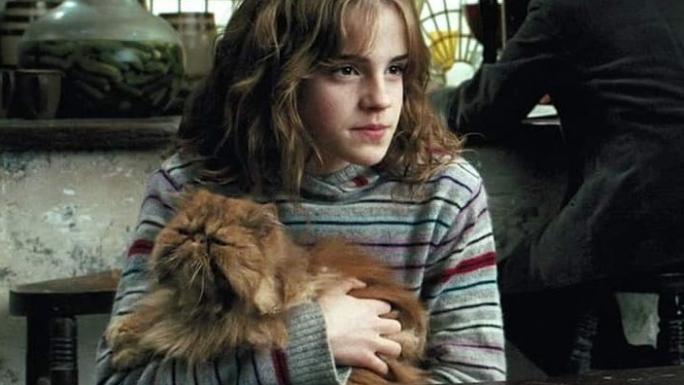 Le chat Pattenrond dans les bras de Hermione